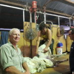 Sheep investments help to mitigate risk at Pingaring
