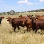 Strong returns for livestock boosts finance opportunities